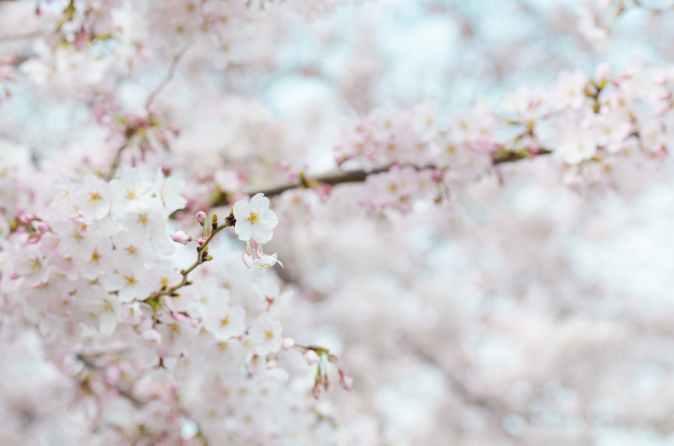 bloom blooming blur branch